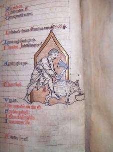 Slaughtering a Pig (BPL MS f. Med. 84, f. 6v)